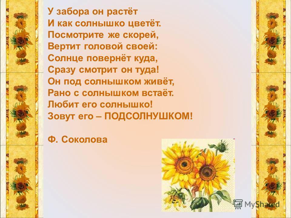 У забора он растёт И как солнышко цветёт. Посмотрите же скорей, Вертит головой своей: Солнце повернёт куда, Сразу смотрит он туда! Он под солнышком живёт, Рано с солнышком встаёт. Любит его солнышко! Зовут его – ПОДСОЛНУШКОМ! Ф. Соколова