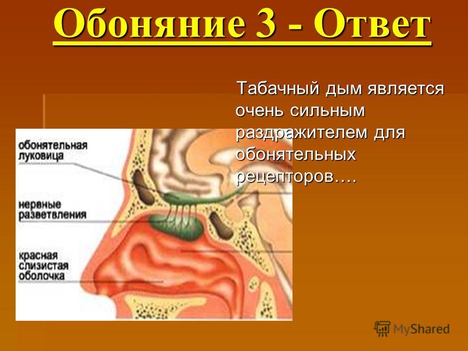 Обоняние 3 - Ответ Обоняние 3 - Ответ Табачный дым является очень сильным раздражителем для обонятельных рецепторов….