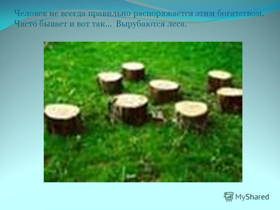 Человек не всегда правильно распоряжается этим богатством. Часто бывает и вот так… Вырубаются леса.