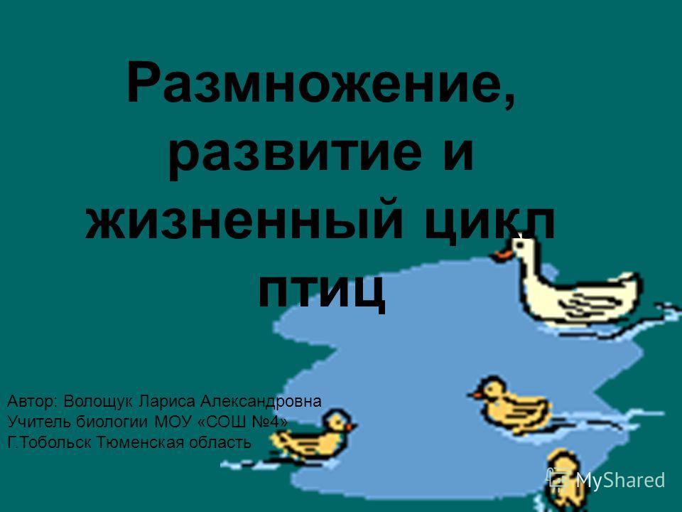 Размножение, развитие и жизненный цикл птиц Автор: Волощук Лариса Александровна Учитель биологии МОУ «СОШ 4» Г.Тобольск Тюменская область