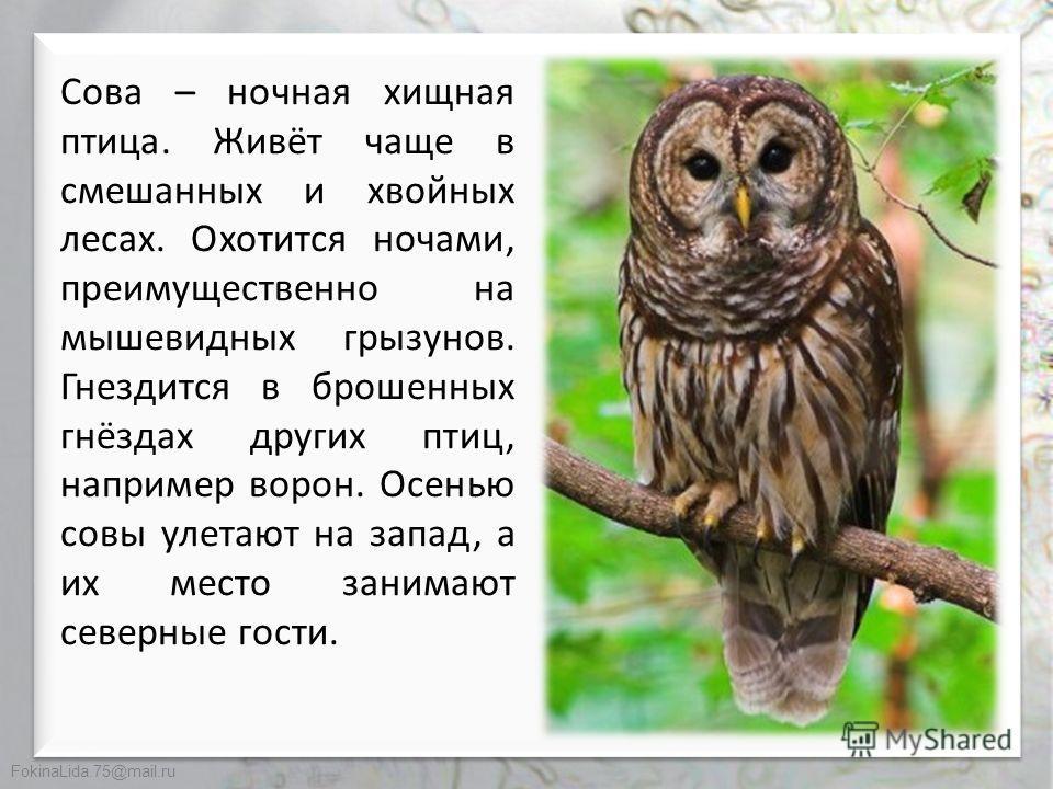 FokinaLida.75@mail.ru Виталий Валентинович Бианки «Сова»