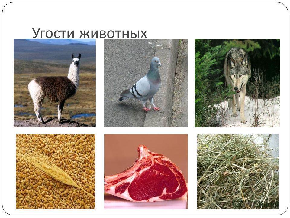 Угости животных