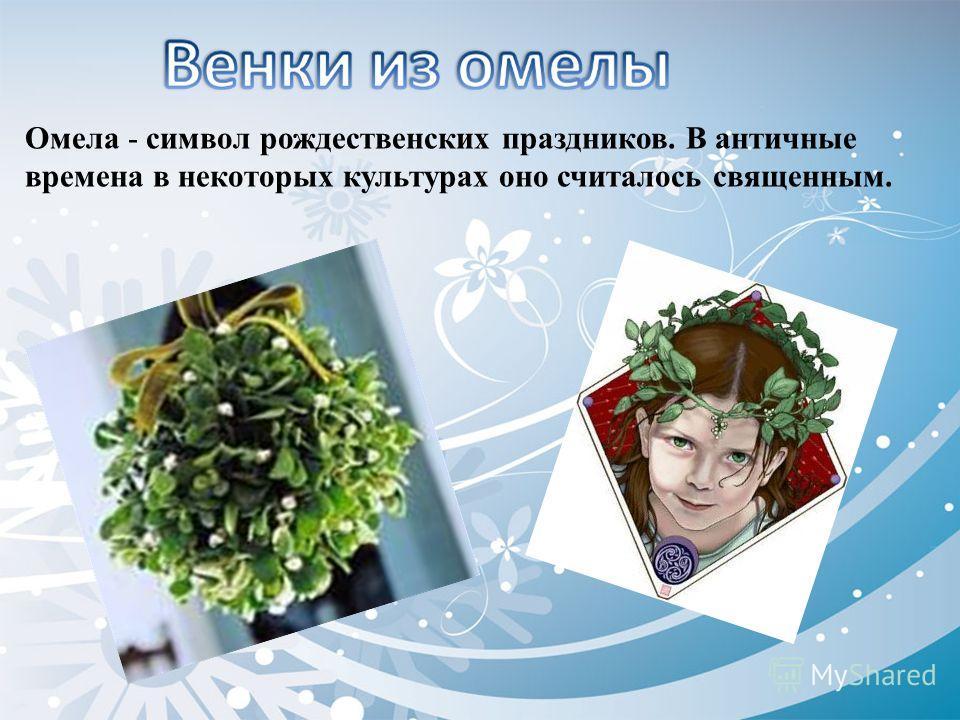 Омела - символ рождественских праздников. В античные времена в некоторых культурах оно считалось священным.