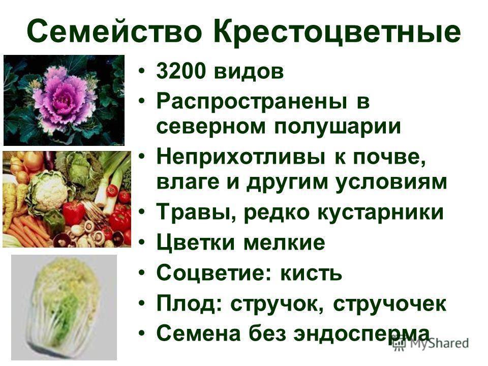 3200 видов Распространены в северном полушарии Неприхотливы к почве, влаге и другим условиям Травы, редко кустарники Цветки мелкие Соцветие: кисть Плод: стручок, стручочек Семена без эндосперма