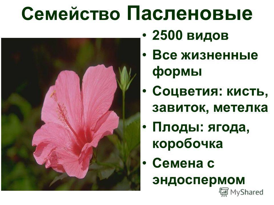 2500 видов Все жизненные формы Соцветия: кисть, завиток, метелка Плоды: ягода, коробочка Семена с эндоспермом