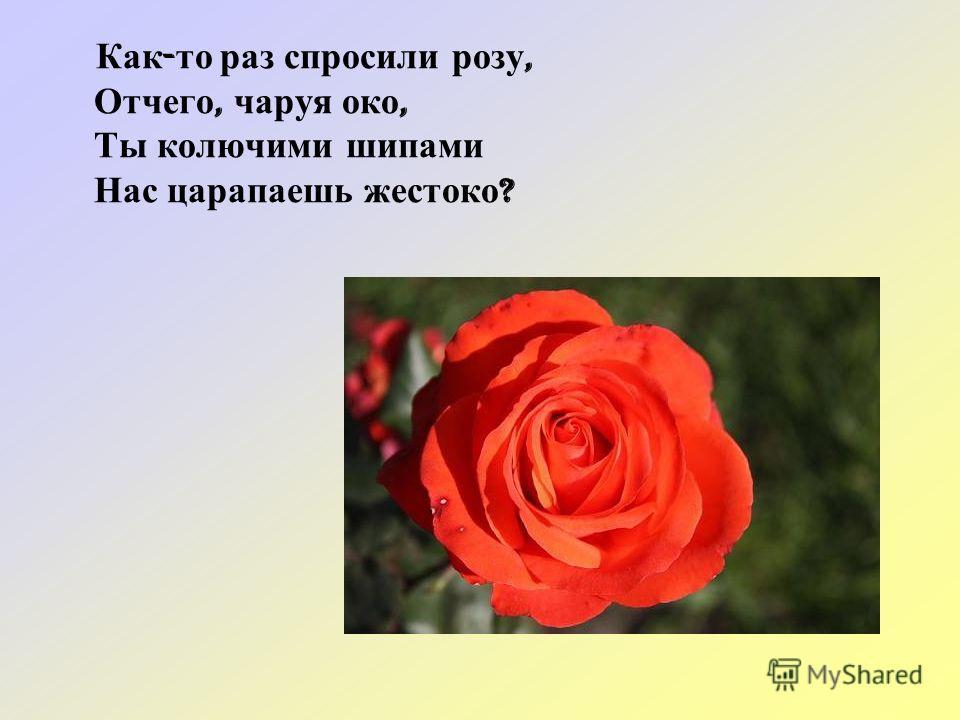 Как - то раз спросили розу, Отчего, чаруя око, Ты колючими шипами Нас царапаешь жестоко ?