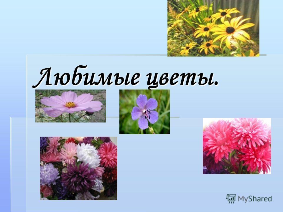Любимые цветы.