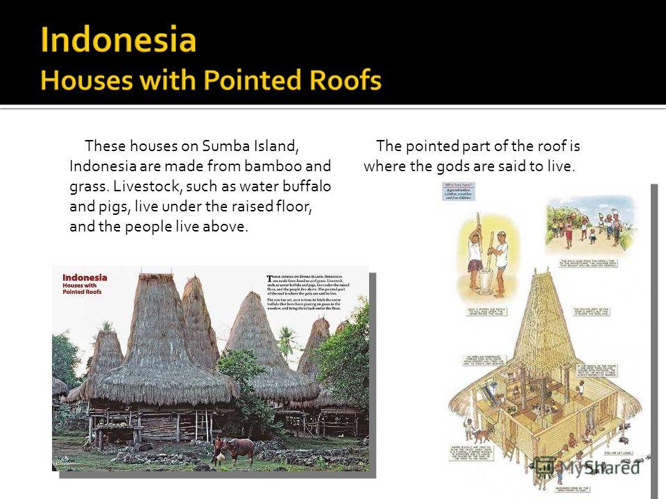 These houses on Sumba Island, Indonesia are made from bamboo and grass. Livestock, such as water buffalo and pigs, live under the raised floor, and the people live above. The pointed part of the roof is where the gods are said to live.