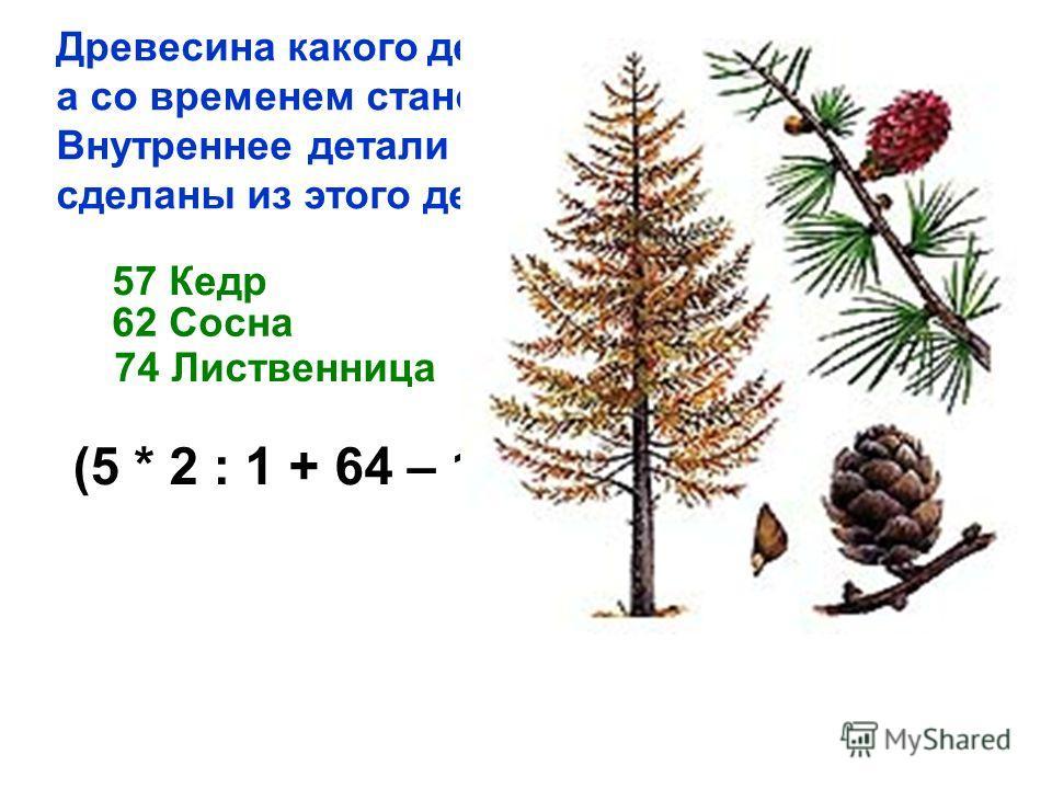 Древесина какого дерева не гниет, а со временем становится тверже? Внутреннее детали Московского Кремля сделаны из этого дерева и служат уже 500 лет. 57 Кедр 62 Сосна 74 Лиственница (5 * 2 : 1 + 64 – 18 + 4) : 10 * 2 : 1 +62