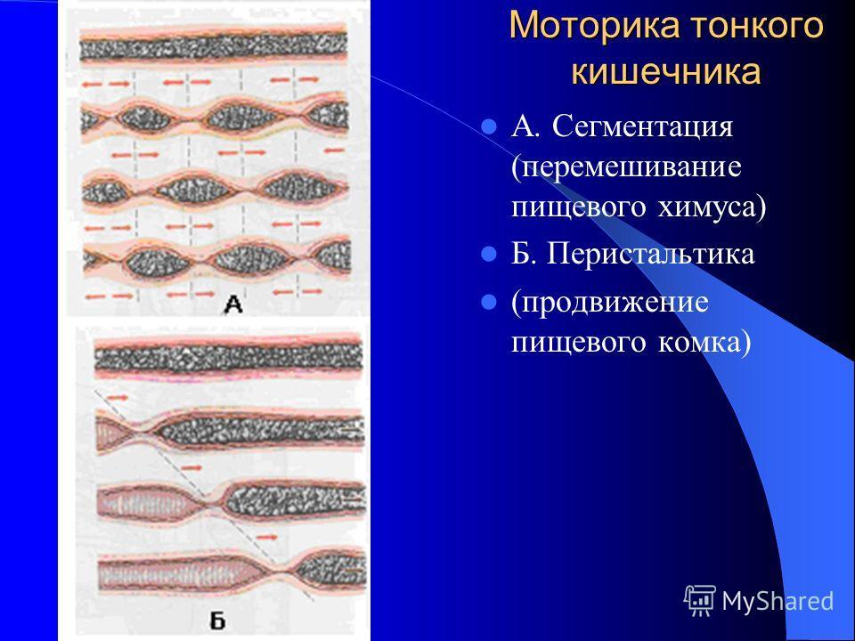 Моторика тонкого кишечника А. Сегментация (перемешивание пищевого химуса) Б. Перистальтика (продвижение пищевого комка)