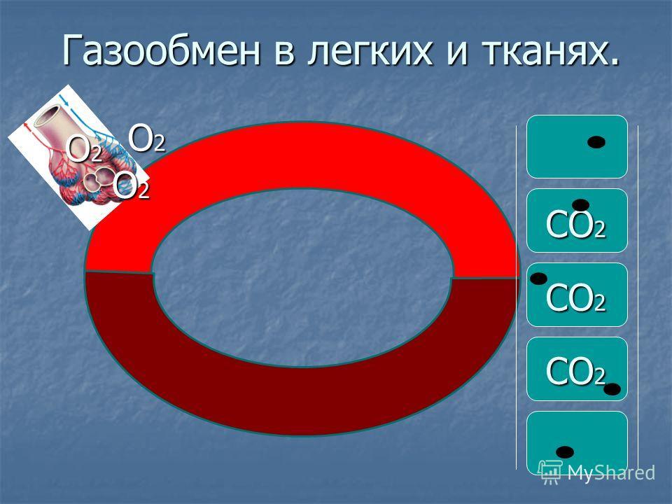 Газообмен в легких и тканях. О2О2О2О2 О2О2О2О2 О2О2О2О2 СО 2