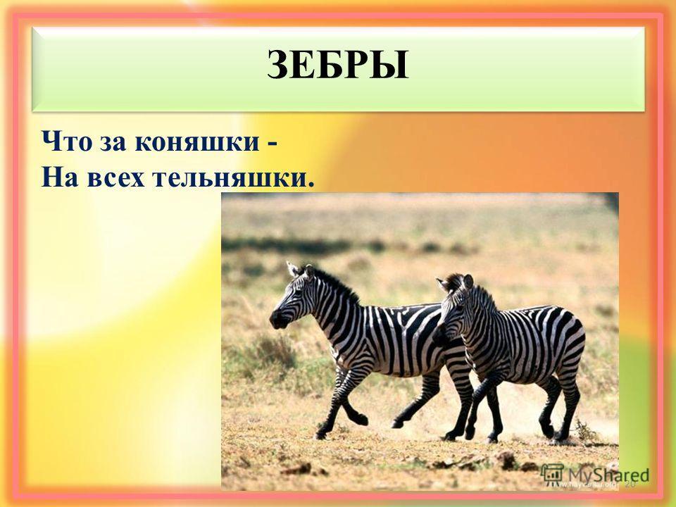 ЗЕБРЫ Что за коняшки - На всех тельняшки. 20