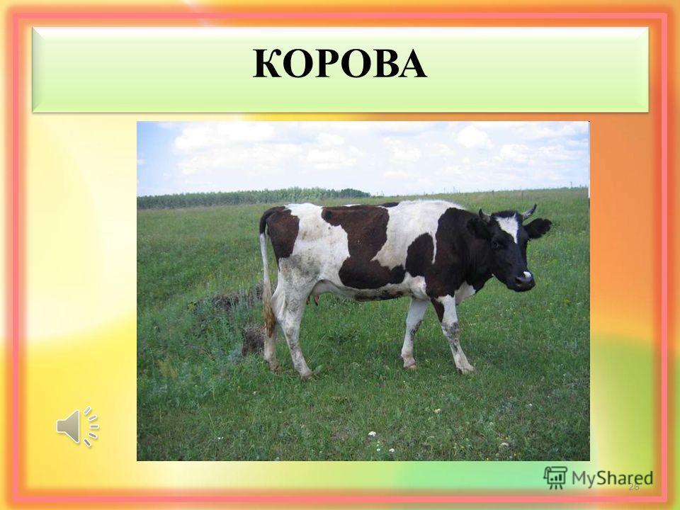КОРОВА 26