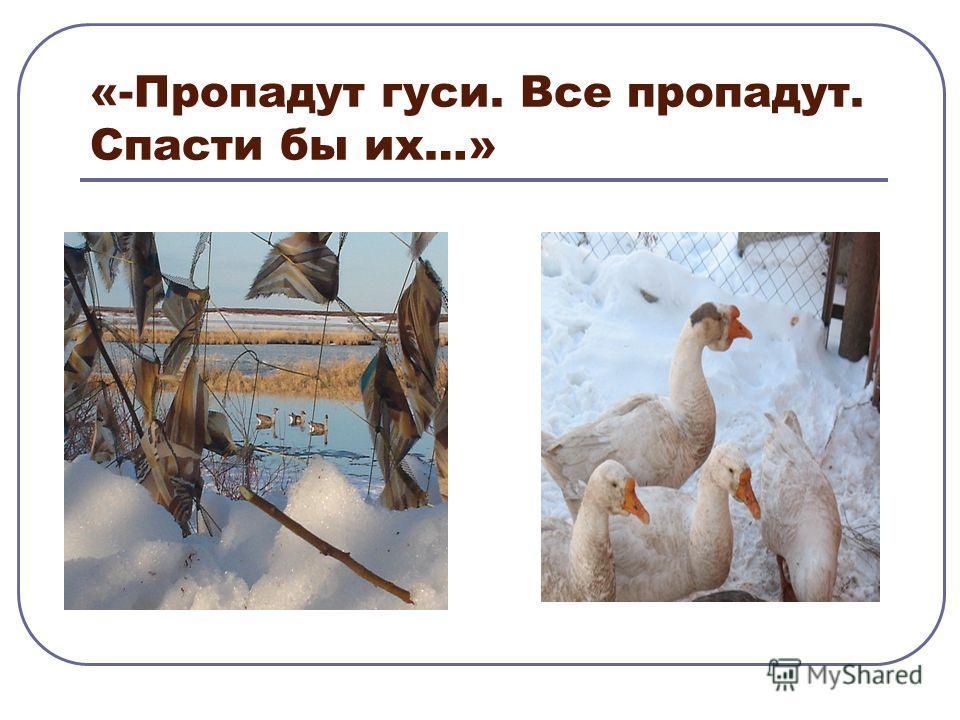 «-Пропадут гуси. Все пропадут. Спасти бы их…»