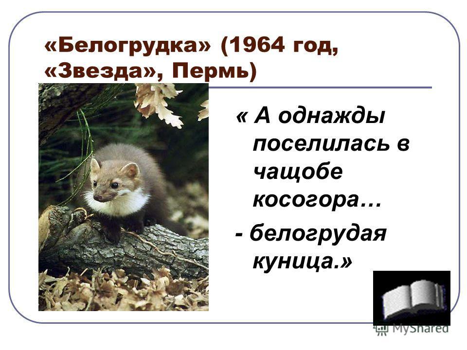 «Белогрудка» (1964 год, «Звезда», Пермь) « А однажды поселилась в чащобе косогора… - белогрудая куница.»