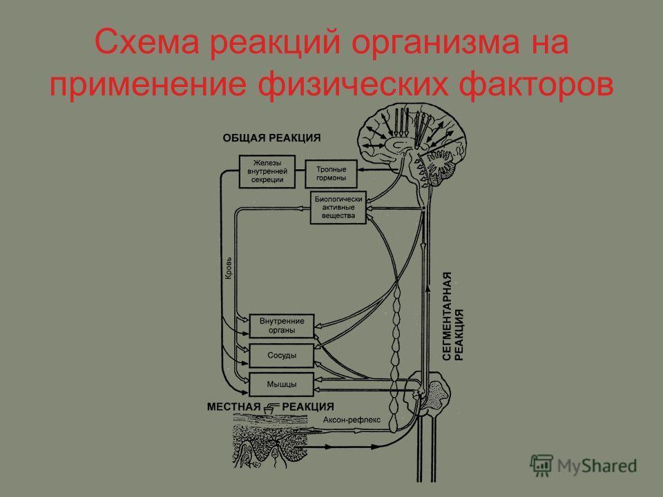 Схема реакций организма на применение физических факторов