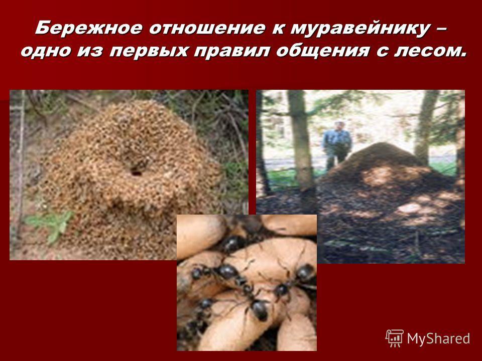 Бережное отношение к муравейнику – одно из первых правил общения с лесом.