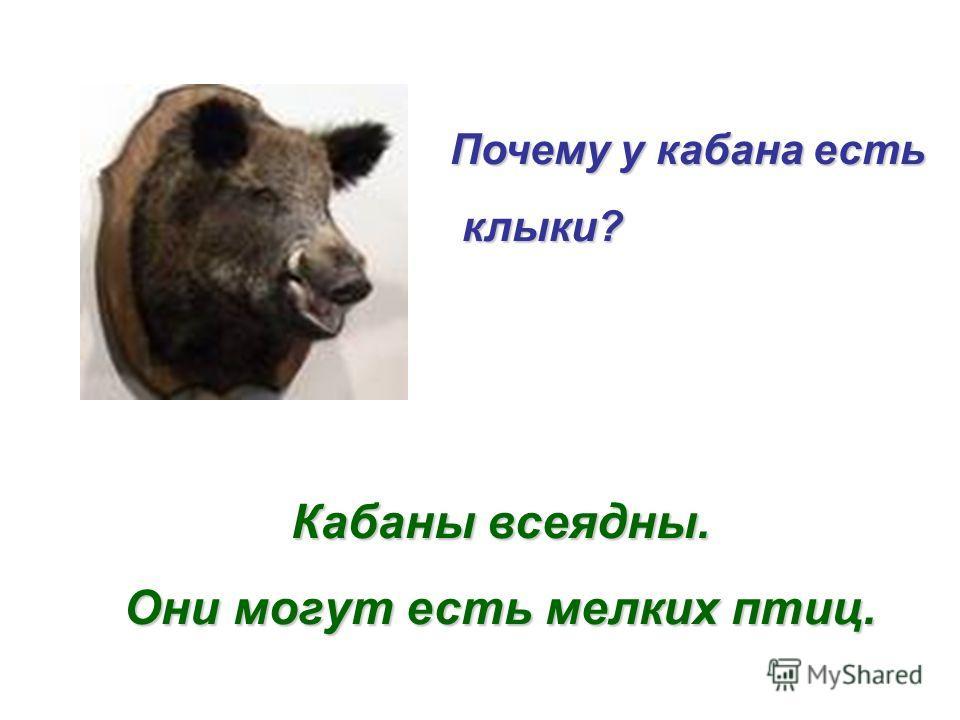 Есть ли клыки у коровы и лошади? Почему? Корова и лошадь – растительноядные животные. У них нет клыков.