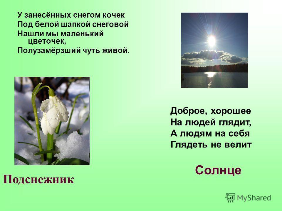 У занесённых снегом кочек Под белой шапкой снеговой Нашли мы маленький цветочек, Полузамёрзший чуть живой. Подснежник Доброе, хорошее На людей глядит, А людям на себя Глядеть не велит Солнце