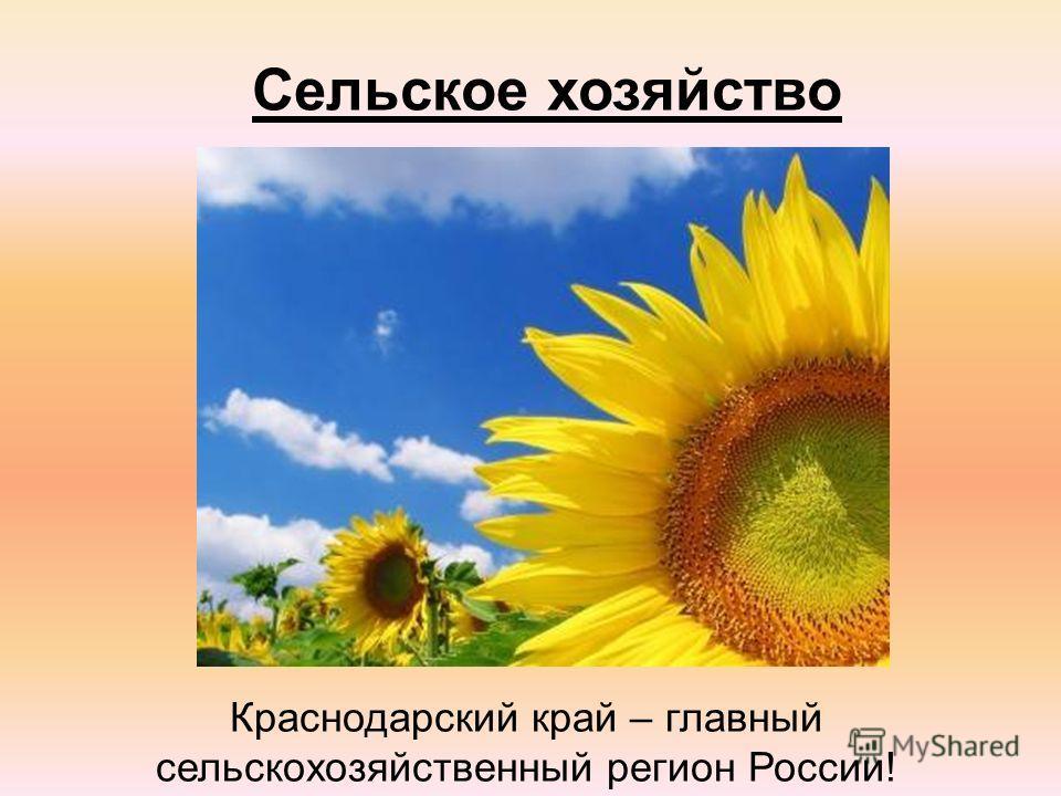 Сельское хозяйство Краснодарский край – главный сельскохозяйственный регион России!