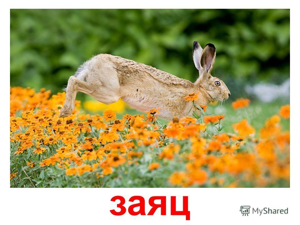 Звуки животных заяц скачать бесплатно