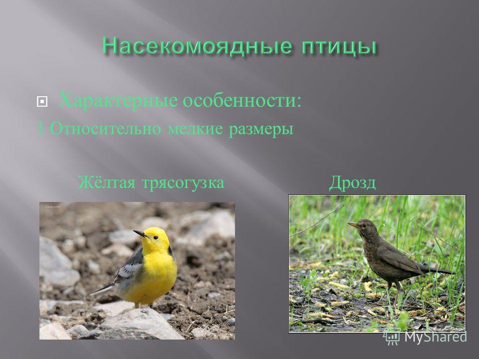 Характерные особенности : 1 Относительно мелкие размеры Жёлтая трясогузка Дрозд