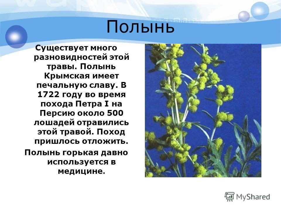 Полынь Существует много разновидностей этой травы. Полынь Крымская имеет печальную славу. В 1722 году во время похода Петра I на Персию около 500 лошадей отравились этой травой. Поход пришлось отложить. Полынь горькая давно используется в медицине.