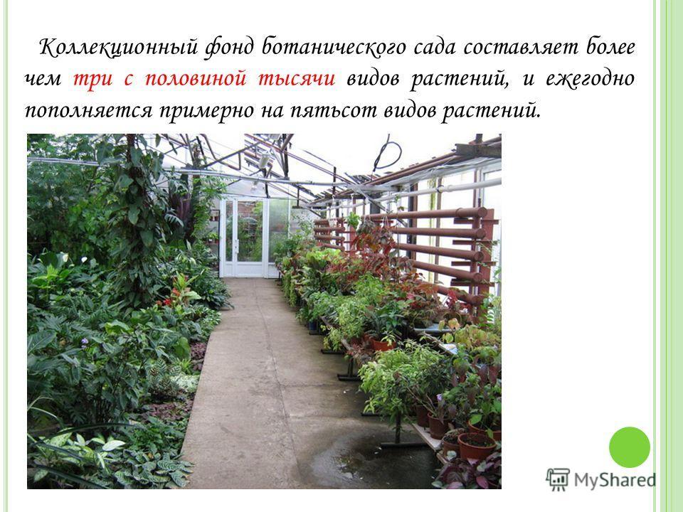 Коллекционный фонд ботанического сада составляет более чем три с половиной тысячи видов растений, и ежегодно пополняется примерно на пятьсот видов растений.