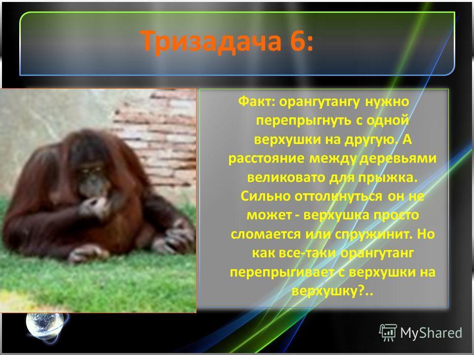 Тризадача 6: Факт: орангутангу нужно перепрыгнуть с одной верхушки на другую. А расстояние между деревьями великовато для прыжка. Сильно оттолкнуться он не может - верхушка просто сломается или спружинит. Но как все-таки орангутанг перепрыгивает с ве