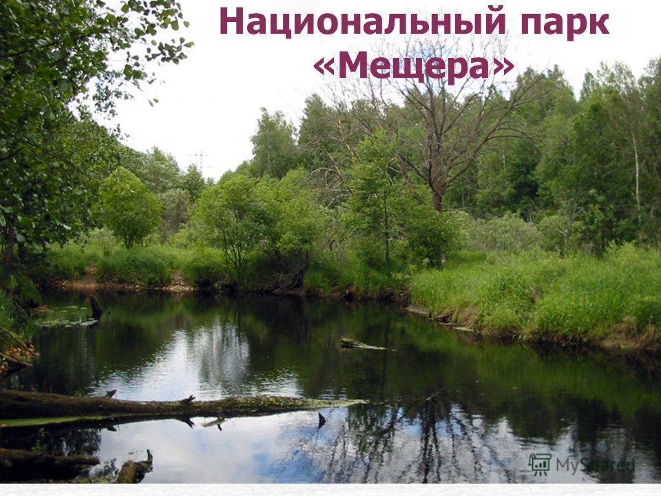 Национальный парк «Мещера»