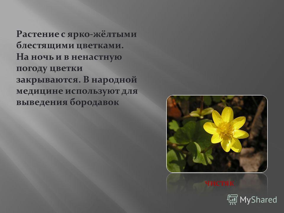 Растение с ярко-жёлтыми блестящими цветками. На ночь и в ненастную погоду цветки закрываются. В народной медицине используют для выведения бородавок чистяк