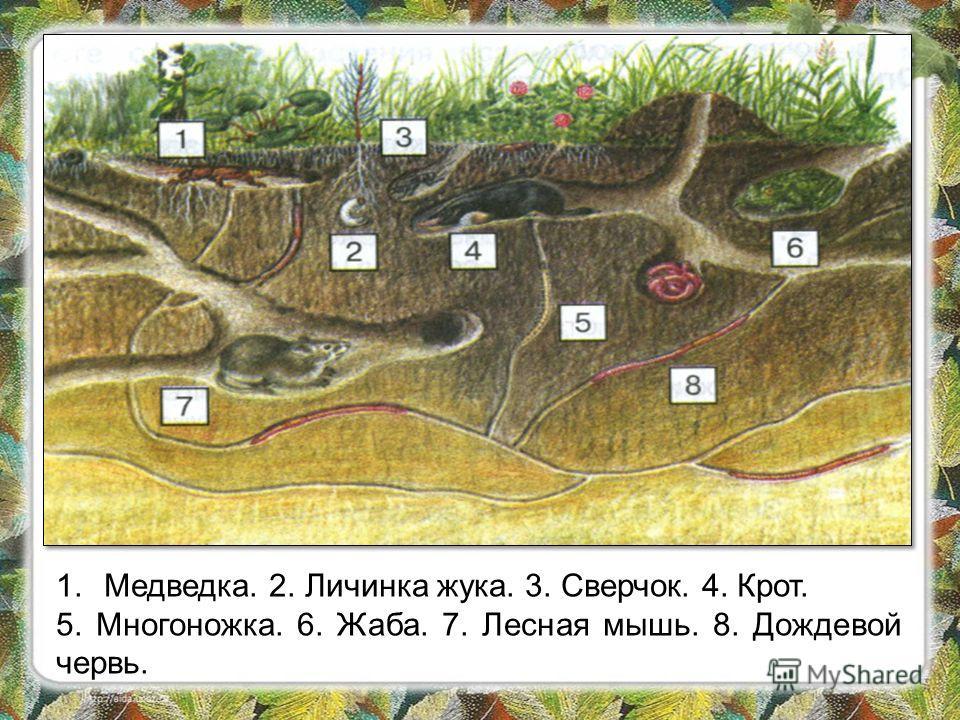 Рассмотрите рисунок на стр. 65. Какое значение имеет почва для растений и животных? Какие животные живут в почве? Обратите внимание на цвет почвенного слоя. В каком слое находится больше всего животных? Подумайте, почему? Назовите главное свойство по