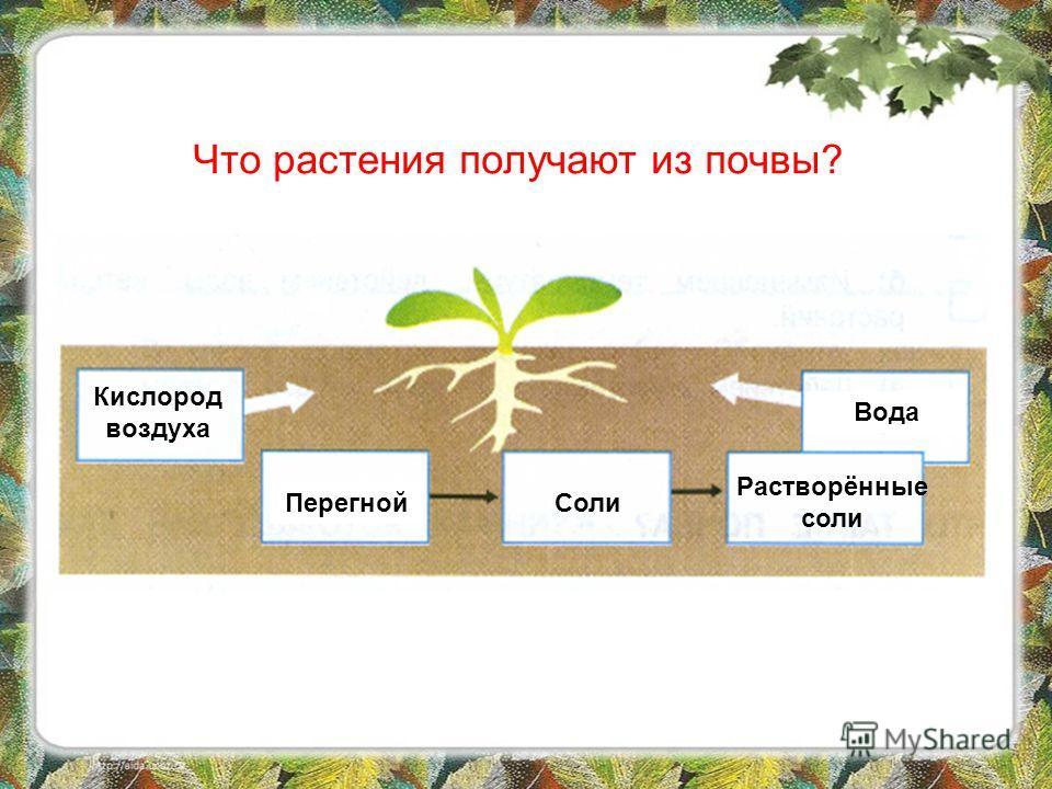 Прочитайте в учебнике текст «Что растения получают из почвы?» (стр. 67). Заполните схему в рабочей тетради (стр. 28, 3) Самостоятельная работа
