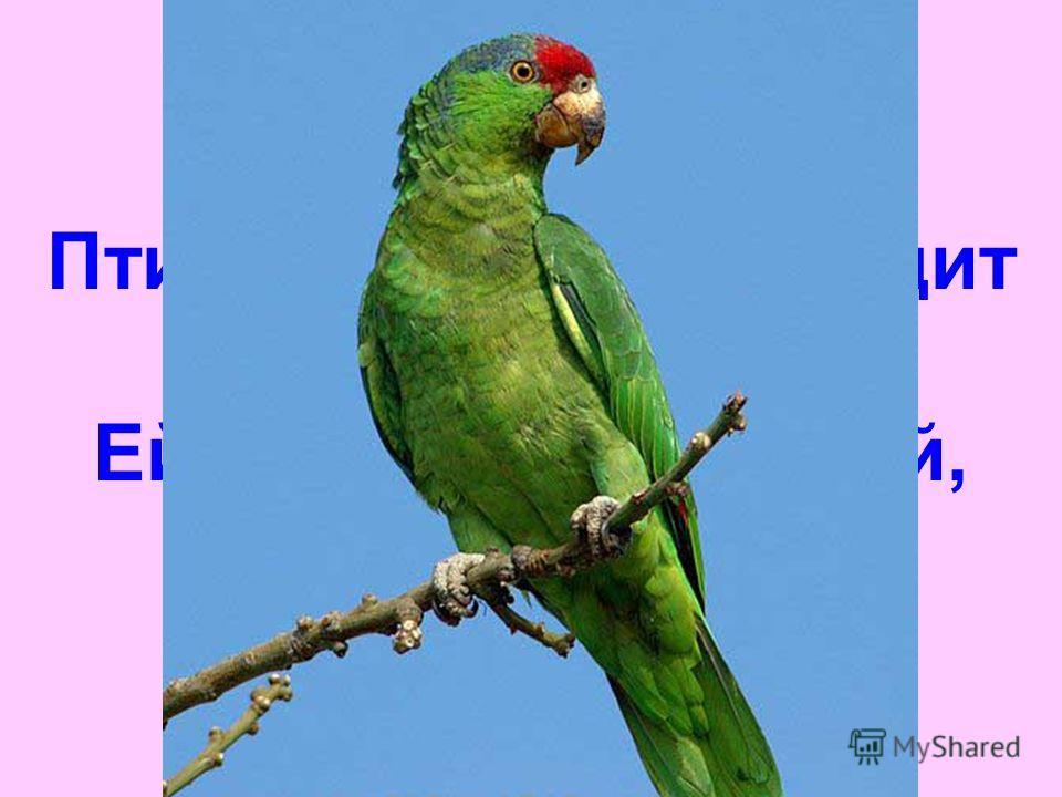 Птичка в клеточке сидит И с тобою говорит. Ей секрет не доверяй, Разболтает...