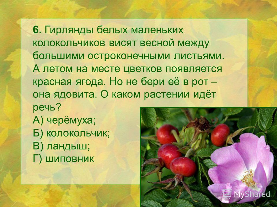 6. Гирлянды белых маленьких колокольчиков висят весной между большими остроконечными листьями. А летом на месте цветков появляется красная ягода. Но не бери её в рот – она ядовита. О каком растении идёт речь? А) черёмуха; Б) колокольчик; В) ландыш; Г