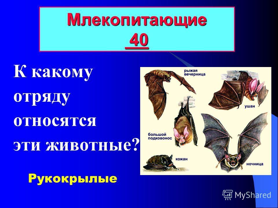 Какое млекопитающее имеет орган птицы? Млекопитающие 30 30 30 Утконос