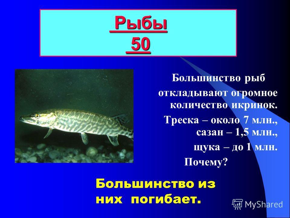 Рыбы 40 40 40 Воспринимает силу тока воды. Какие функции выполняет боковая линия у рыб?