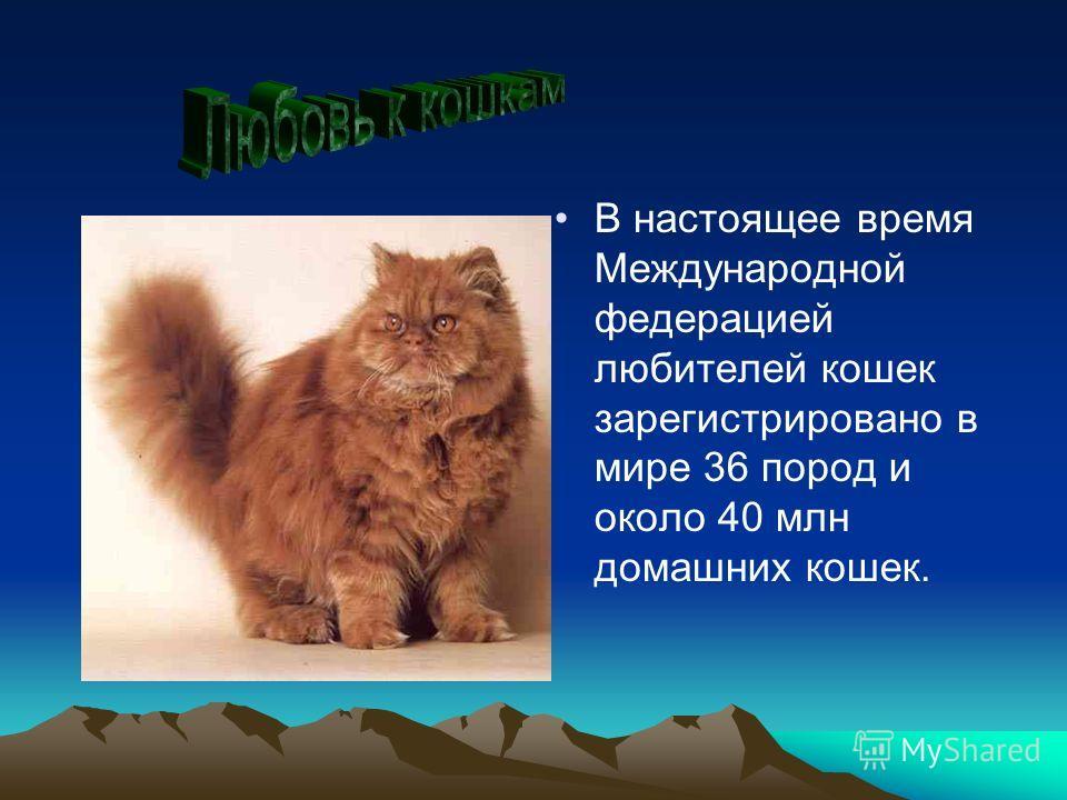В настоящее время Международной федерацией любителей кошек зарегистрировано в мире 36 пород и около 40 млн домашних кошек.