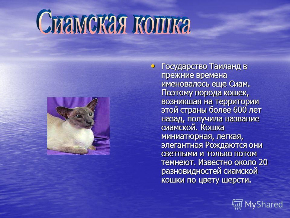 Государство Таиланд в прежние времена именовалось еще Сиам. Поэтому порода кошек, возникшая на территории этой страны более 600 лет назад, получила название сиамской. Кошка миниатюрная, легкая, элегантная Рождаются они светлыми и только потом темнеют