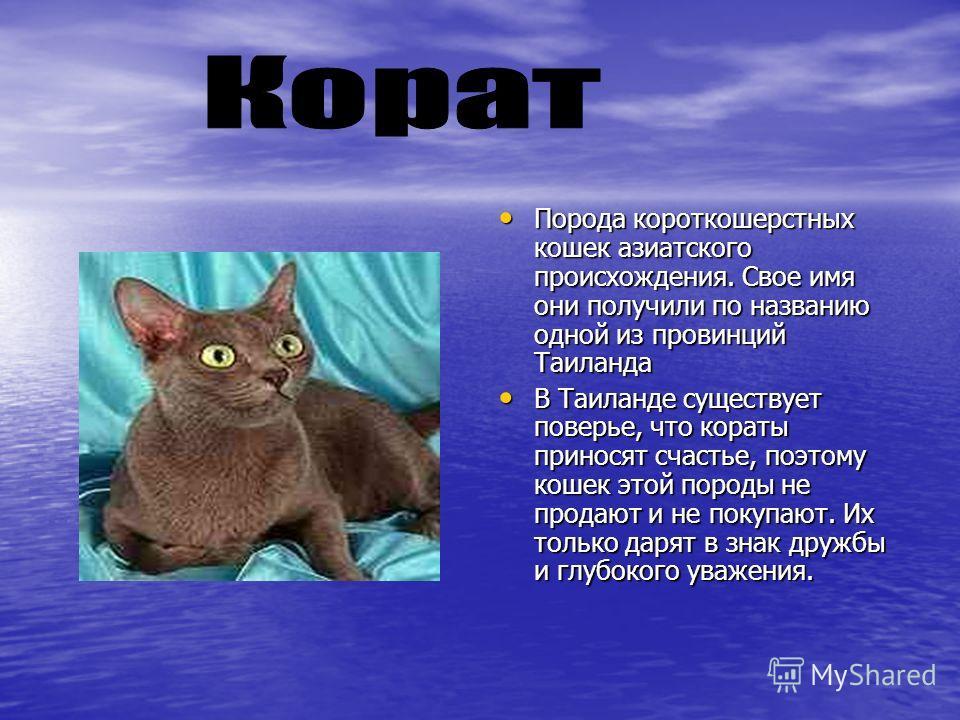 Порода короткошерстных кошек азиатского происхождения. Свое имя они получили по названию одной из провинций Таиланда Порода короткошерстных кошек азиатского происхождения. Свое имя они получили по названию одной из провинций Таиланда В Таиланде сущес