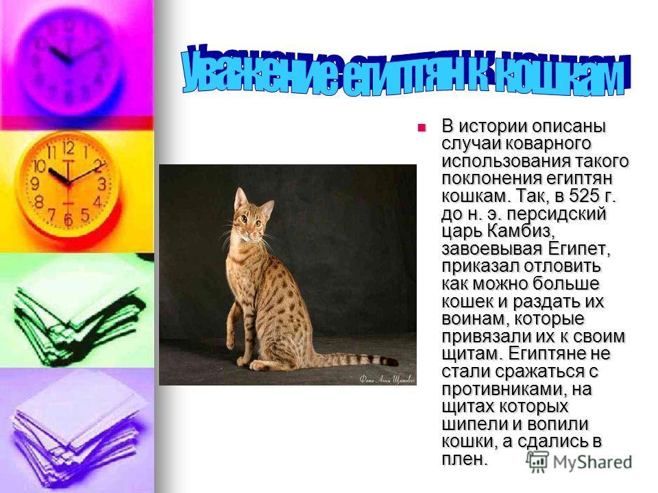 В истории описаны случаи коварного использования такого поклонения египтян кошкам. Так, в 525 г. до н. э. персидский царь Камбиз, завоевывая Египет, приказал отловить как можно больше кошек и раздать их воинам, которые привязали их к своим щитам. Еги