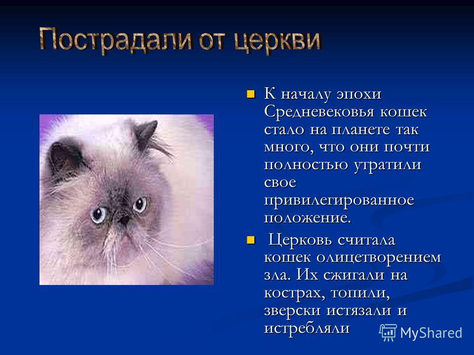 К началу эпохи Средневековья кошек стало на планете так много, что они почти полностью утратили свое привилегированное положение. Церковь считала кошек олицетворением зла. Их сжигали на кострах, топили, зверски истязали и истребляли