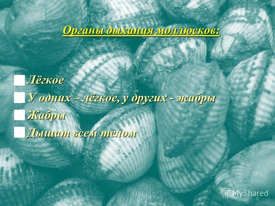 Органы дыхания моллюсков: Лёгкое Лёгкое У одних – лёгкое, у других - жабры У одних – лёгкое, у других - жабры Жабры Жабры Дышат всем телом Дышат всем телом