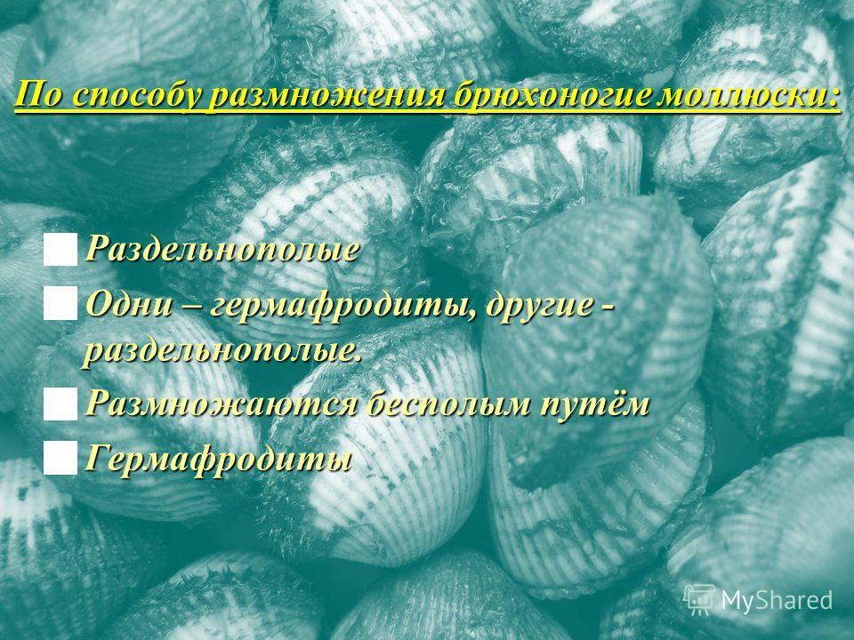 По способу размножения брюхоногие моллюски: Раздельнополые Раздельнополые Одни – гермафродиты, другие - раздельнополые. Одни – гермафродиты, другие - раздельнополые. Размножаются бесполым путём Размножаются бесполым путём Гермафродиты Гермафродиты