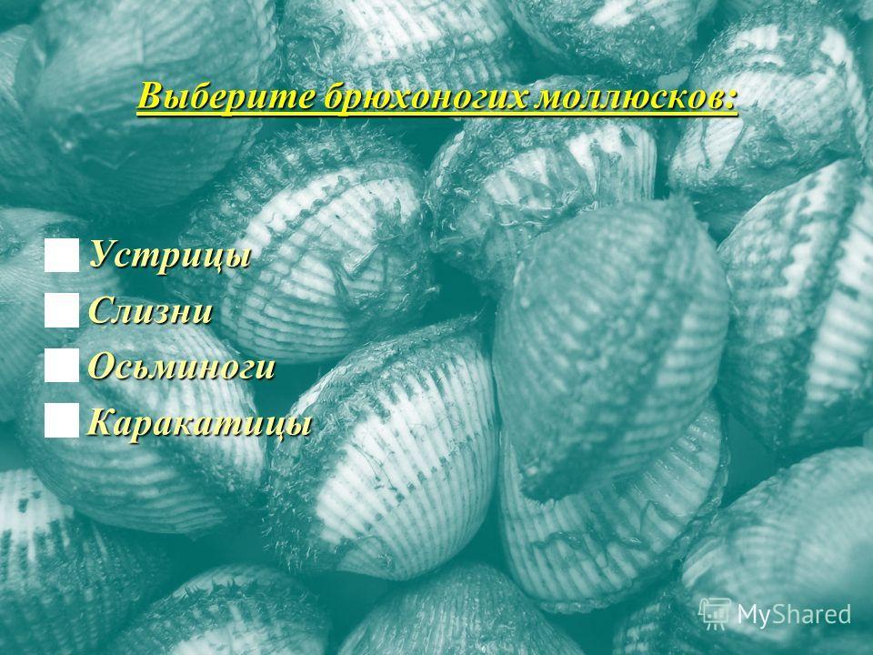Выберите брюхоногих моллюсков: Устрицы Устрицы Слизни Слизни Осьминоги Осьминоги Каракатицы Каракатицы