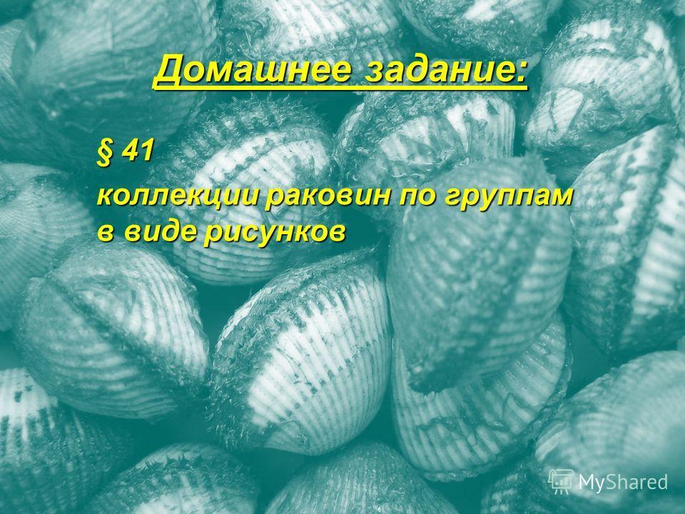 Домашнее задание: § 41 коллекции раковин по группам в виде рисунков