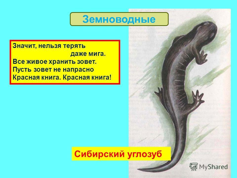 Сибирский углозуб Значит, нельзя терять даже мига. Все живое хранить зовет. Пусть зовет не напрасно Красная книга. Красная книга! Земноводные