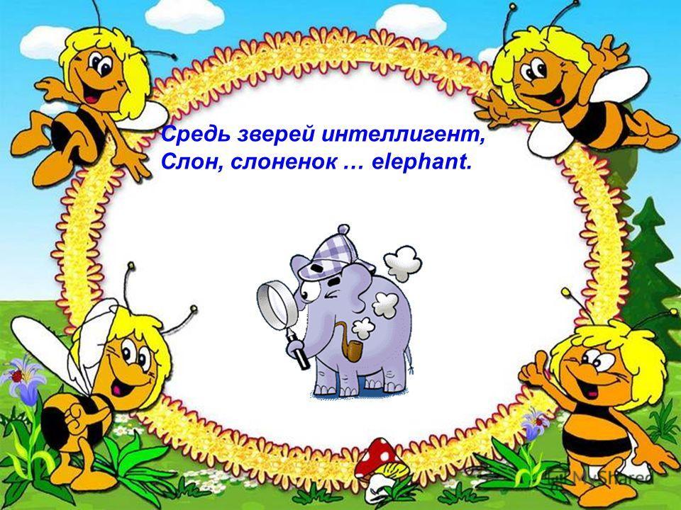 Средь зверей интеллигент, Слон, слоненок … elephant.