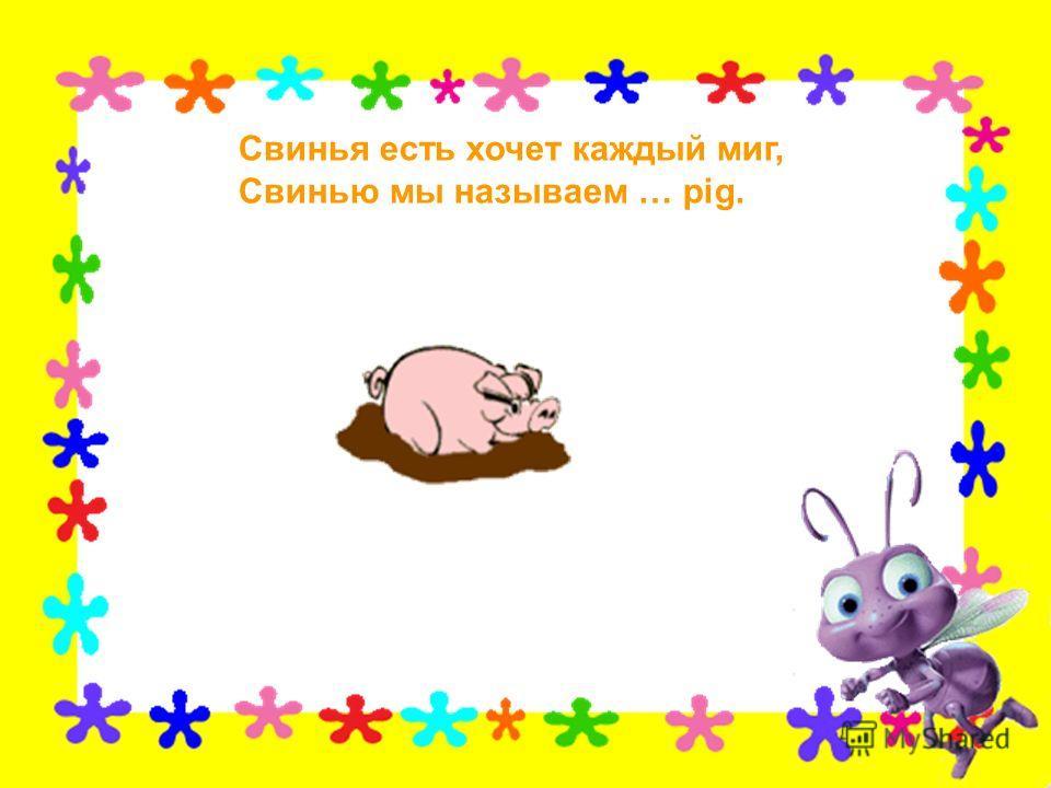Свинья есть хочет каждый миг, Свинью мы называем … pig.