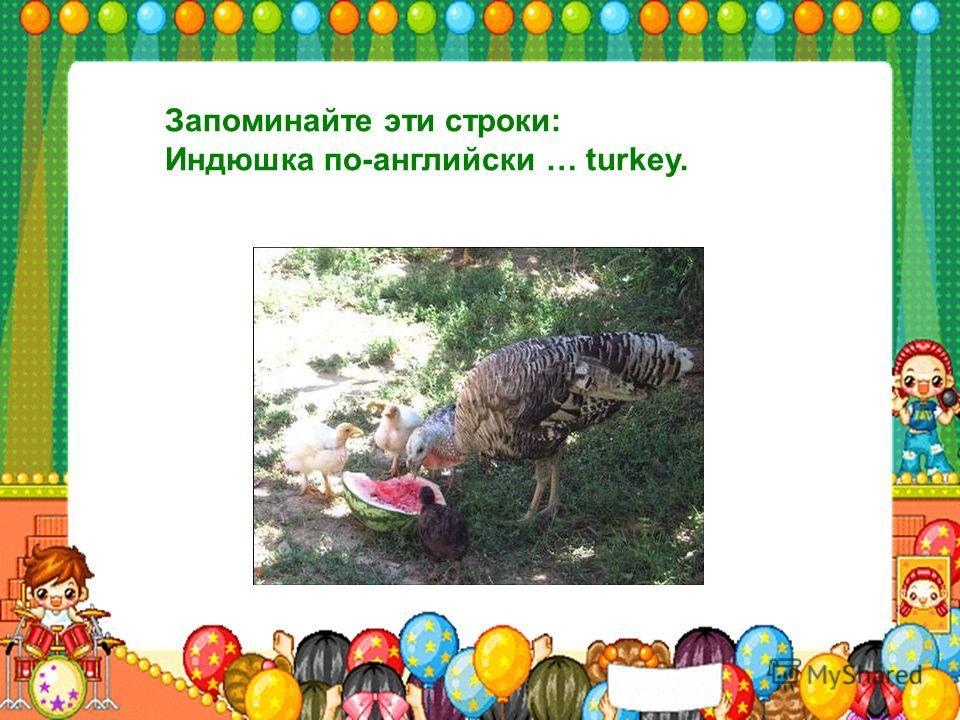 Запоминайте эти строки: Индюшка по-английски … turkey.